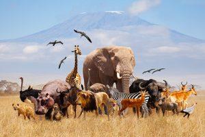 Friedliche Tiergruppe, Gruppensitzungen- und Coaching